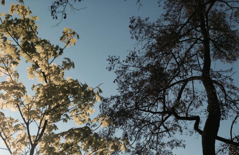 wiosna słońce drzew ebook slow life