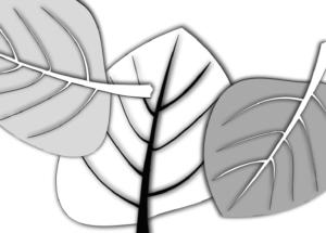 detal plakat botaniczny liście